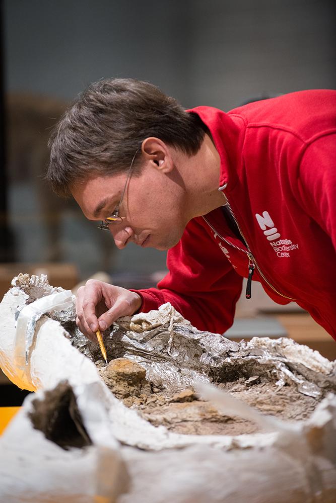 Paleontoloog Anne Schulp in actie